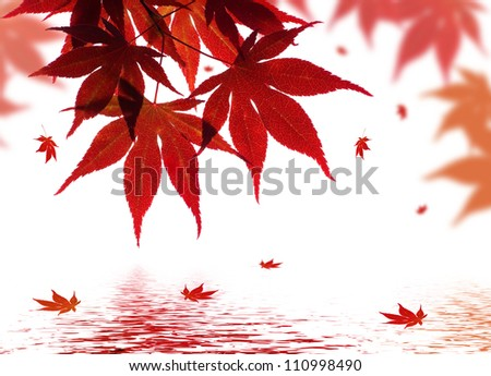 A beautiful red maple branch reflected in water with falling leaves in a pond - stock photo