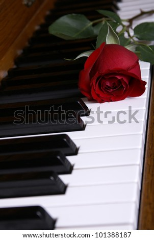 A beautiful red rose laying on piano keys