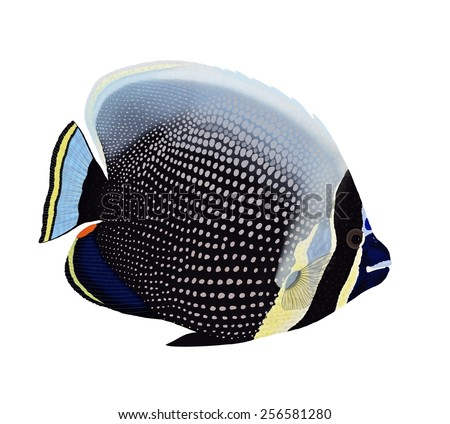 A beautiful Reticulated Butterflyfish (Chaetodon reticulatus) isolated on a white background, drawn and digitally painted by Steven Russell Smith. - stock photo