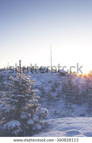 A beautiful scenery on a winter day in Finland. A lonely and small spruce is in the front where the focus point is and in the back is a hill with some trees and a sunset. Image has a vintage effect.