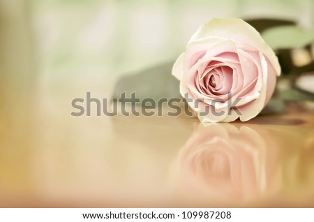 A Beautiful Single Pink Rose with a Shallow Depth of Field (DOF) Lying on a Wooden Table with a Reflection underneath, with room for Text on the left - stock photo