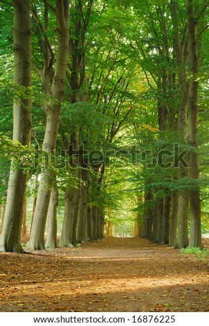 A beautiful straight path in a green environment, while the sun is shining. - stock photo