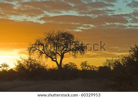 A beautiful sunrise in the Shingwedzi area of Kruger Park - stock photo