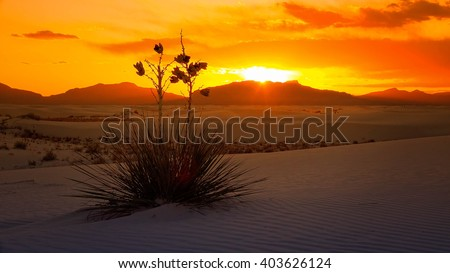 A beautiful sunset of a Yucca plant on the sand dunes at White Sands National Monument in New Mexico - stock photo
