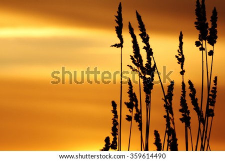 A beautiful sunset on the lake with reed in foreground - stock photo