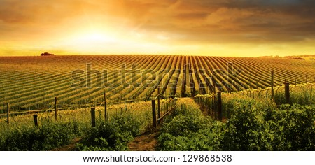 A Beautiful Sunset over a Barossa Vineyard - stock photo