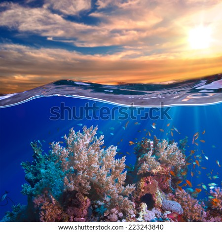 A beautiful tropical  coral reef with fish at sunset time - stock photo