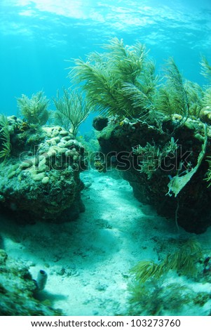 A beautiful underwater reef seascape in the ocean with gorgonians and sea plants