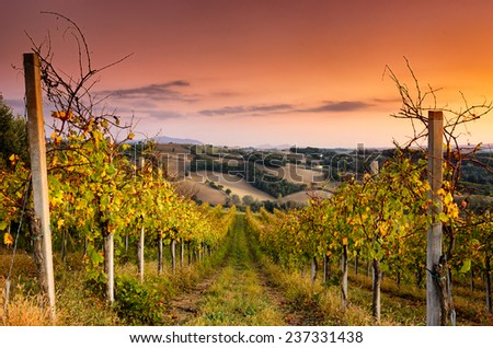 A beautiful vineyard across the hills of San Terenziano, Umbria, central Italy - stock photo