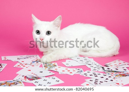 a beautiful white cat on a pink background