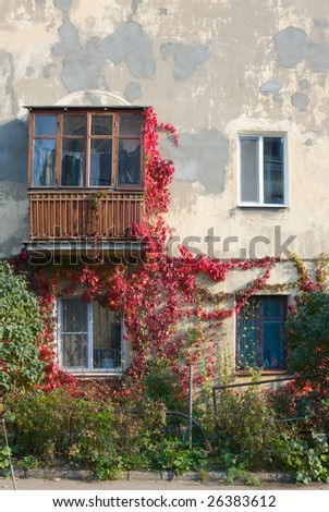 A beautiful windowed building winded with autumn ivy