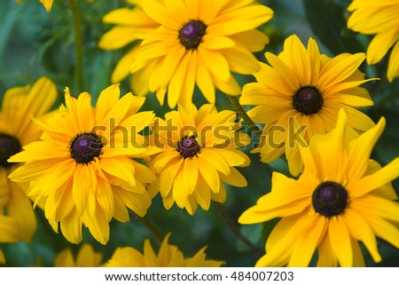 A beautiful yellow flowers background in summer