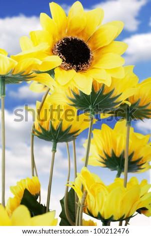 A beautiful yellow sunflowers field with bright blue clouds in the sky