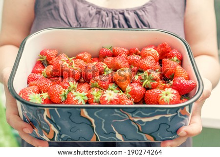 A beautiful young woman holding up a very large bowl of fresh strawberries - young brunette woman with blue bowl of fresh strawberries. - stock photo
