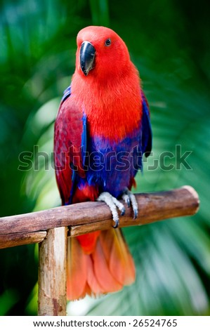 A beautifuly coloured parrot