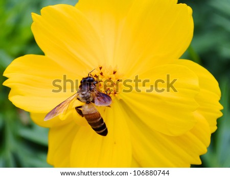 A bee busy drinking nectar from the flower - stock photo