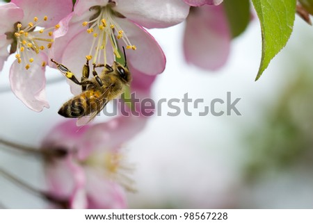 A bee is gathering honey - stock photo