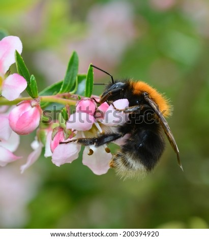 A bee on a flower. - stock photo