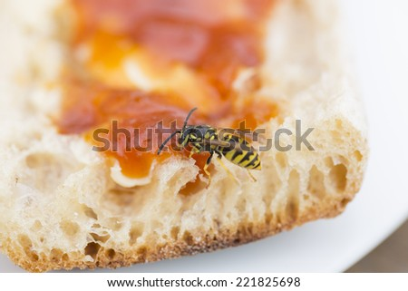 A bee on a slice of bread and jam - stock photo