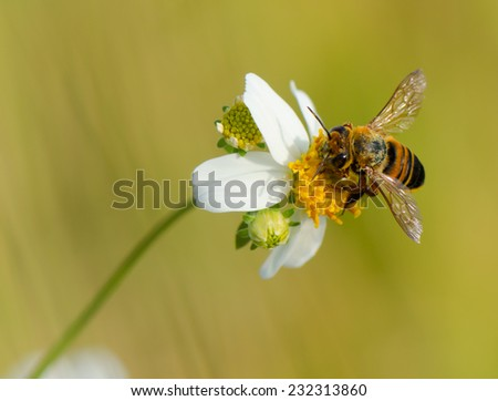A bee on wild flower, close up. - stock photo