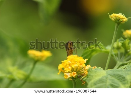 A bee resting on a yellow flower surrounded by greenery. - stock photo