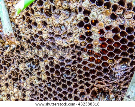 A beehive (honeycomb) is an enclosed structure in which some honey bee species of the subgenus Apis live and raise their young - stock photo