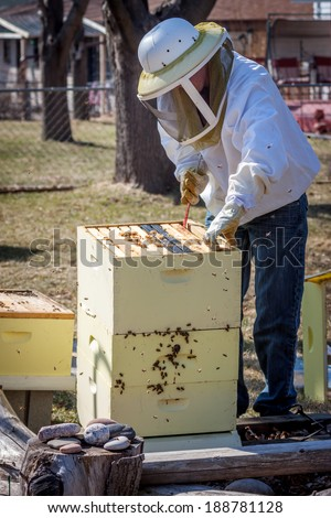 A beekeeper moves frames around inside the bee box