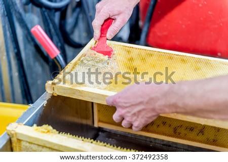 A beekeeper uses an unccaping fork to scrape along the honeycomb and remove  wax caps before extracting honey in the centrifuge.