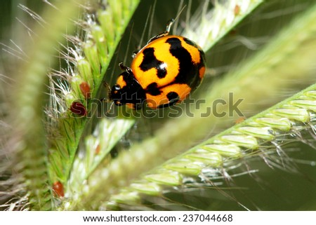 A beetle on grass flower