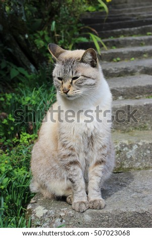 a beige cat sitting on the stone step