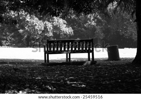 A bench situated in a park under the trees