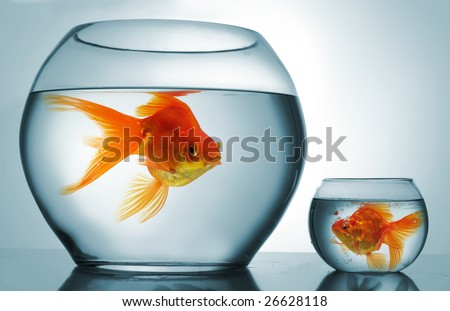 A big bowl and a small one with goldfish - stock photo