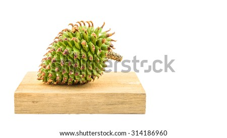 A big fresh green cone isolated on a white background with a place for your text - stock photo