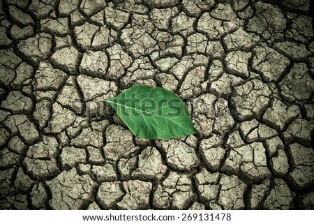 a big green leaf on dry and cracked ground / environmental destruction - stock photo