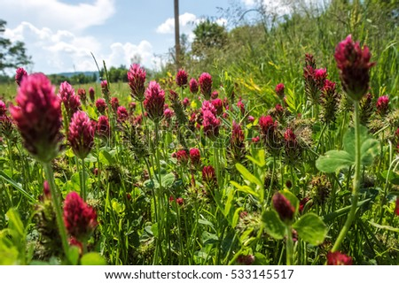A big group of pink lupins with tall stems in the midst of a garden or a grassland