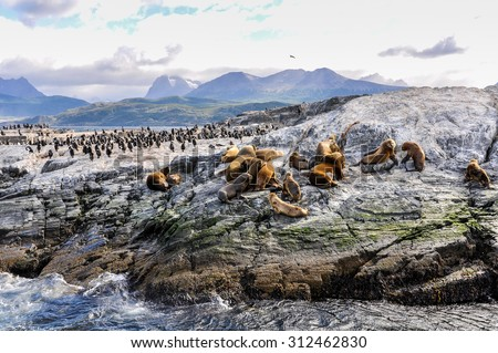 A big group of seals and sea lions, Beagle Channel, Ushuaia, Argentina - stock photo