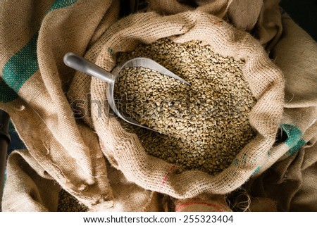 A big metal scoop in the raw coffee seeds sack - stock photo