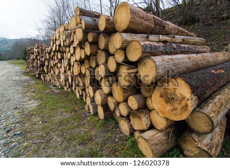 A big pile of wood in a forest road - stock photo