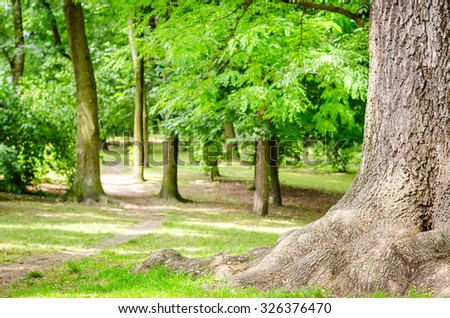 a big root tree in green park - stock photo