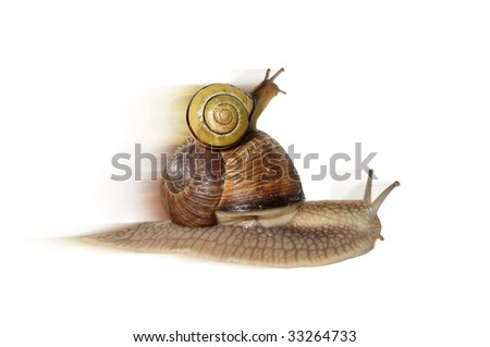 a big snail carrying a small one on her back - stock photo