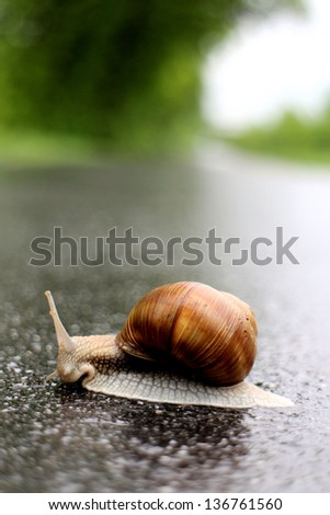 A big snail with a brown spiral house is moving across an asphalt road - stock photo