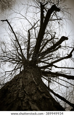 A big tree in black and white from below - stock photo