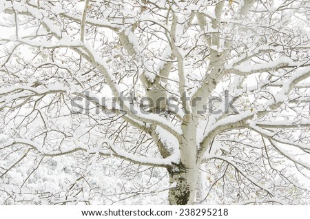 A big tree with snow - stock photo