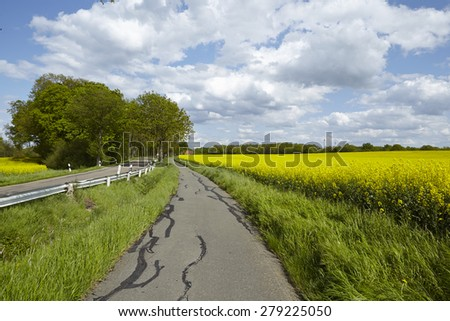 A bike lane with some trees, a blossoming yellow colza field and a blue sky with white clouds taken at bright sunshine. - stock photo