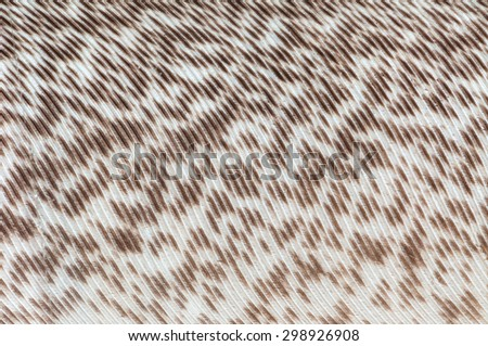 A bird feathers with brown and white fiber