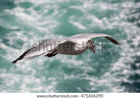 A bird flying above the sea