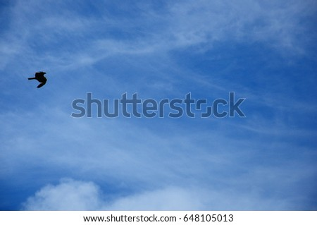 https://thumb1.shutterstock.com/display_pic_with_logo/167494286/648105013/stock-photo-a-bird-flying-in-the-sky-648105013.jpg