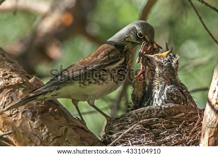 a bird in the nest feeding their Pets
