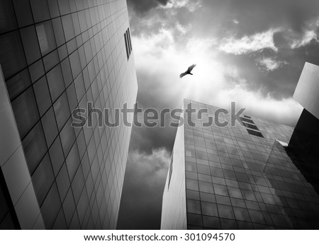 A bird is flying with big wings high above city buildings in black and white for a freedom or escape concept. - stock photo