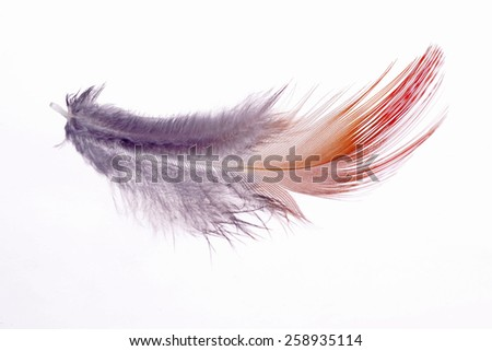 A bird's feathers, color is very beautiful